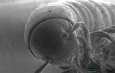 Ростовский биолог открыл три новых вида многоножек