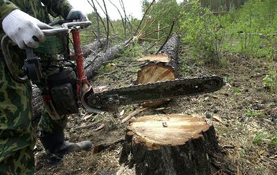Прокуратура выявила нарушения в сфере лесовосстановления в лесничестве Иркутской области