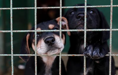 Правительство утвердило новые правила обращения с животными в приютах
