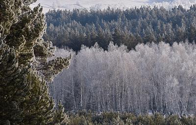 Ученые: изменение климата сдвинет лесотундру Сибири на 100 км севернее к 2050 году