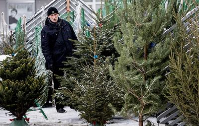 Около 300 елочных базаров открывается в Москве
