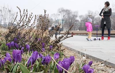Синоптики прогнозируют раннюю весну в европейской части России