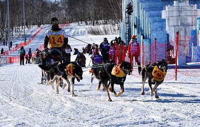 """Юбилейная гонка на собачьих упряжках """"Берингия-2020"""" открылась на Камчатке"""