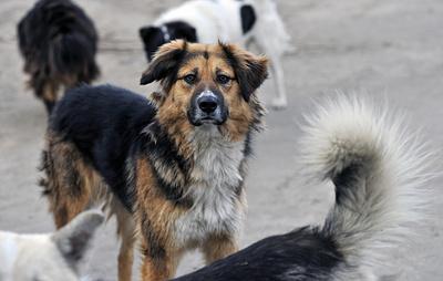 Лишь треть регионов РФ подготовила документы для исполнения закона о бездомных животных