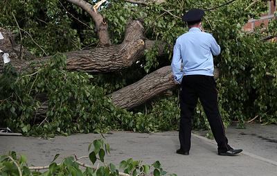 Число погибших в результате урагана в Екатеринбурге увеличилось до четырех