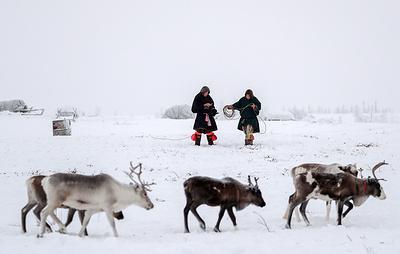 Оленеводы в Якутии получат по 1 млн рублей для покупки или строительства жилья