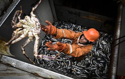 Эксперты: спрос на дальневосточных крабов начал восстанавливаться в странах АТР
