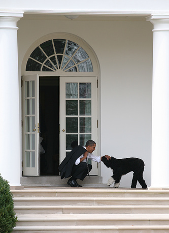 US President Barack Obama has a male Portuguese Water Dog Bo. The coice of breed was determined by Portuguese waterdogs being  hypoallergenic