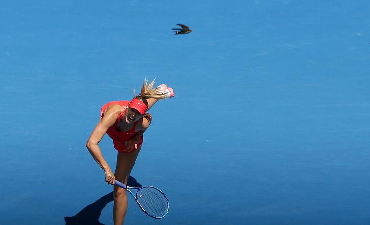 In the semifinal match Maria Sharapova breezed past her Russian compatriot Ekaterina Makarova 6-3, 6-2