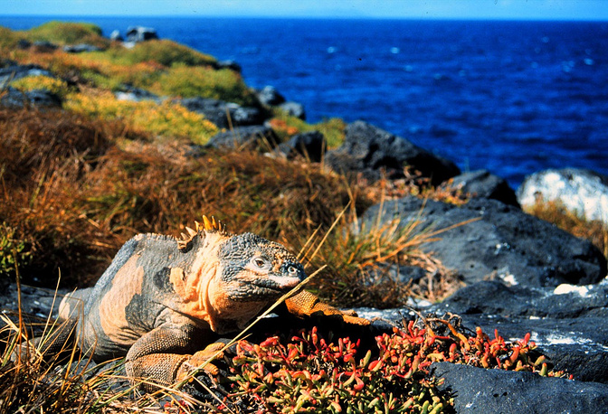 Galapagos Islands, an archipelago of volcanic islands located 906 km west of continental Ecuador, and their surrounding waters form an a national park and a biological marine reserve