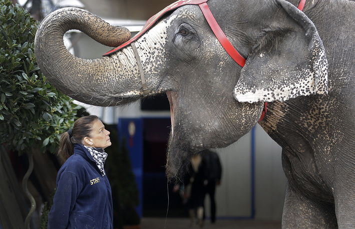 On average, an adult elephant weighs 3.5 tons and can reach a height of 3 m