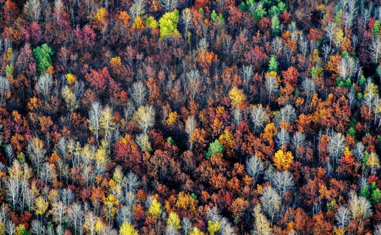 Geometry of the fall, by Konstantin Tolokonnikov (Voronezh). Photo: Voronezh region