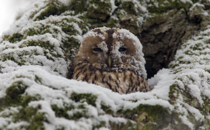 At the snowstorm, by Sergei Kolosov (St. Petersburg). Photo: owl, Peterhof