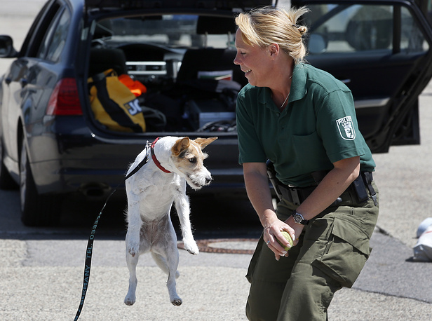 Jack Russel explosives detection dog Lilli playing with its coach police officer in Berlin, Germany