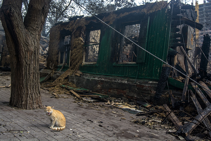 A cat sits by a burnt house hit by a huge fire in a residential area in the city centre, Rostov-on-Don, Russia, August 23