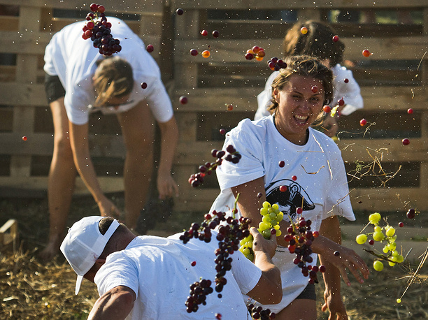 People throw grapes at each other at the WineFest grape harvesting and wine making festival at the Zolotaya Balka winery in the city of Balaklava, Russia, September 30
