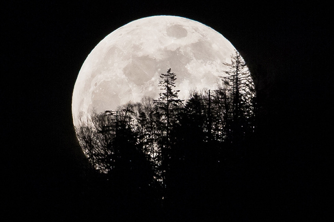 The supermoon rises over trees near the town of Yuzhno-Sakhalinsk on Sakhalin Island in Russia's Far East