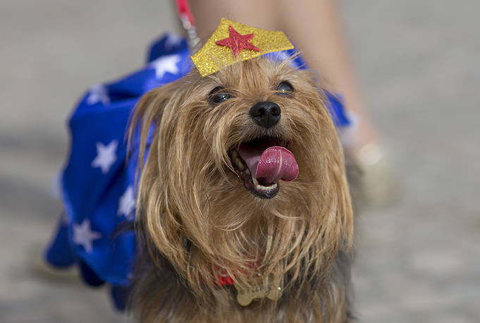 A dog wears a Wonder Woman costume during the dog carnival parade on Copacabana beach in Rio de Janeiro