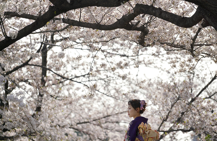 A visitor wearing traditional Japanese kimono strolls under the cherry blossoms in Tokyo, Japan, March 29