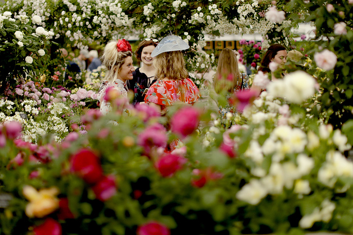 Roses display at the RHS Chelsea Flower Show