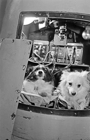 Belka and Strelka on board the Sputnik-5 spacecraft