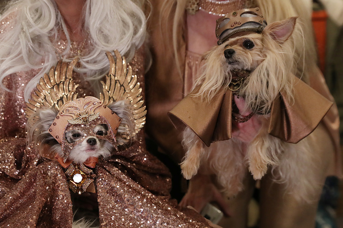 Dogs sit backstage at the 16th annual New York Pet fashion show in New York, February 7