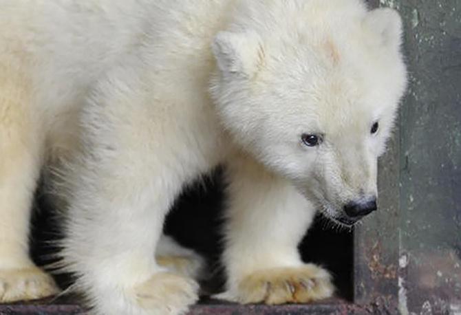 Медвежонок Сэрику