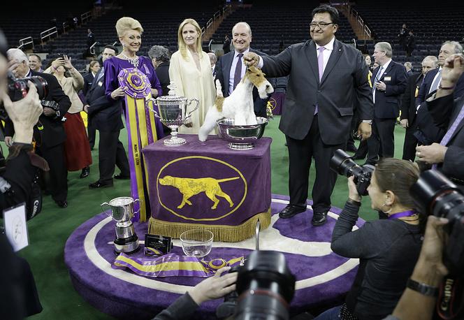Жесткошерстный фокстерьер по кличке Скай победил на самой престижной в США выставке собак Westminster Kennel Club Dog Show