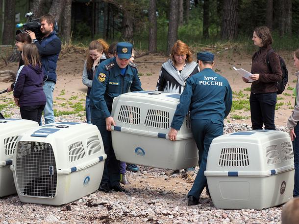 Выпуск на волю десяти тюленей из Центра реабилитации ластоногих