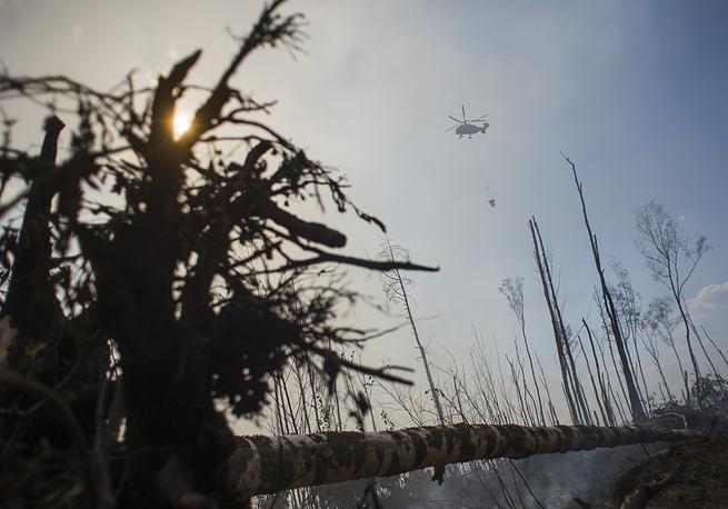 Площадь лесных пожаров в Тверской области достигла 58 га
