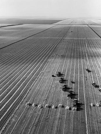 Краснодарский край. Уборка зерновых, 1961 год