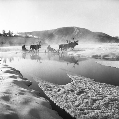 Ямало-Ненецкий АО. Оленьи упряжки, 1964 год