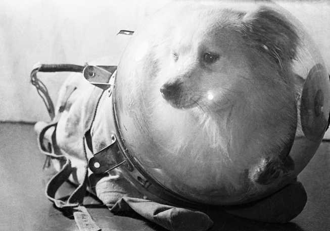 Скафандр для собаки, обеспечивающий безопасность ее пребывания в космосе. 1958 год