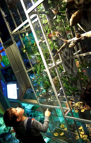 Экспозиция музея рассказывает о теории эволюции, разнообразии жизни на Земле, об изменчивости и наследственности, о естественном отборе и борьбе за существование в природе. На фото: Дарвиновский музей