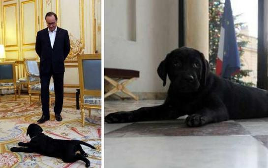 Президент Франции Франсуа Олланд и щенок черного лабрадора Филе