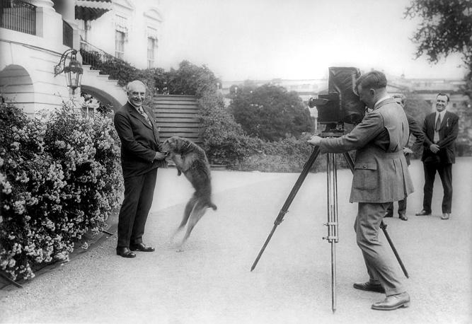 Президент США Уоррен Гардинг со своим эрдельтерьером Laddie Boy, 1922 год