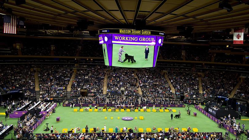 Westminster Dog Show является одной из самых престижных в мире выставок собак. Смотр проводится в выставочных залах, расположенных на пирсах Гудзона