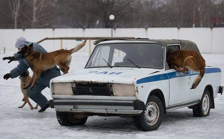 Отработка группового задержания преступников, находящихся в автотранспорте