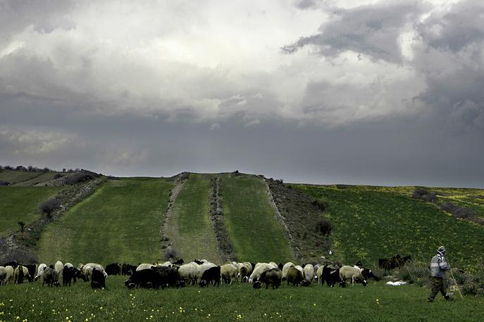 Россельхознадзор сообщил, что намерен начать проверку животноводческих предприятий Греции, Кипра и Венгрии с 6 апреля, чтобы ускорить начало поставок из этих стран в случае отмены продовольственного эмбарго