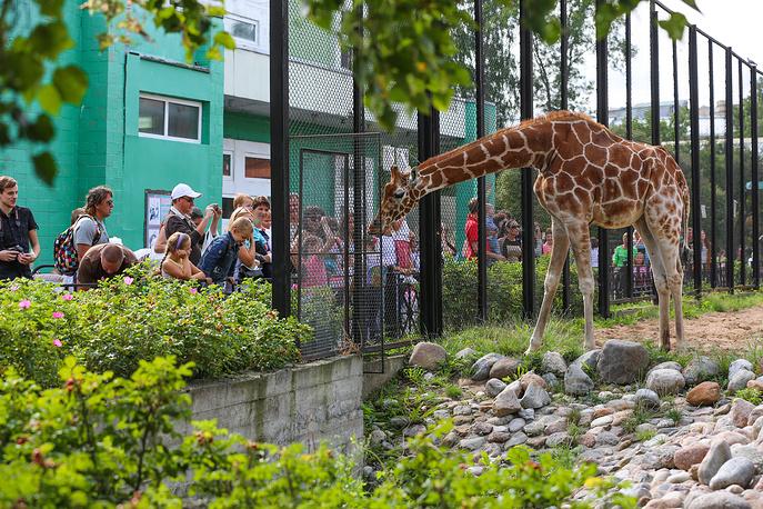 Одна  из долгожителей  зоопарка  самка сетчатого жирафа Луга.  При средней продолжительности жизни жирафов на воле 15-20 лет, она уже перешагнула рубеж в 30 лет