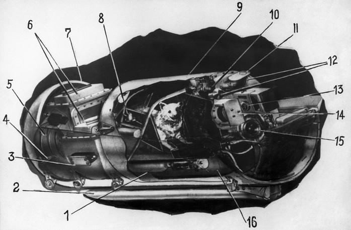 """Кабина с животными космического корабля """"Восток"""", 1960 год"""