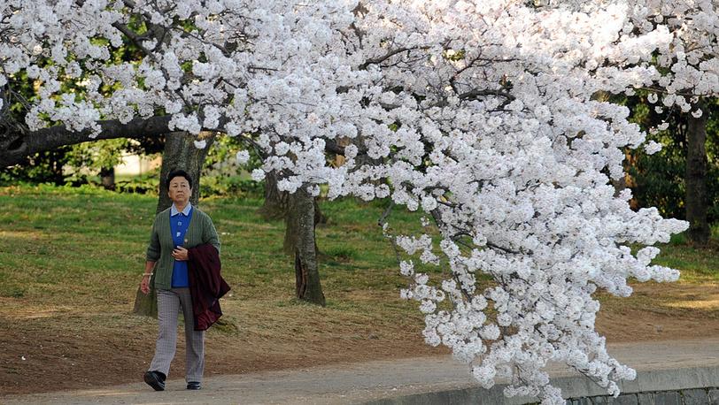 Среди цветущих деревьев