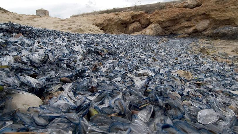 Выброшенные на берег медузы