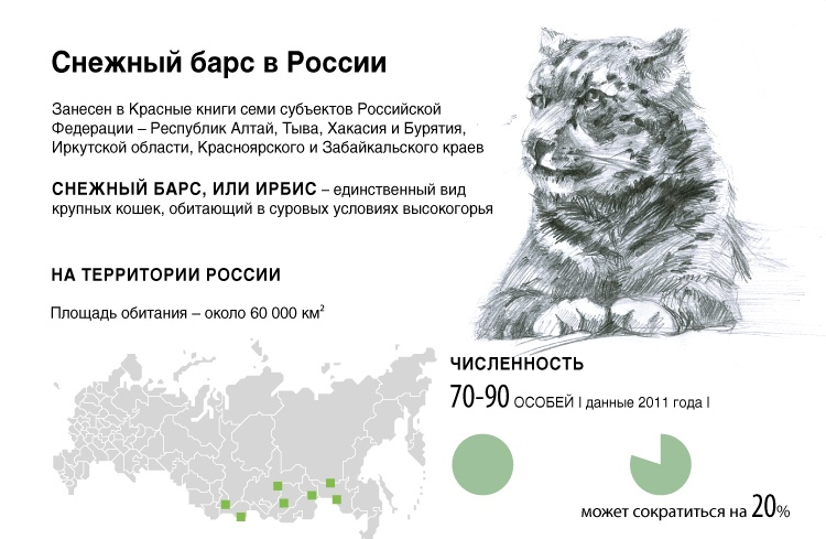 Снежный барс в России
