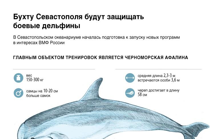Бухту Севастополя будут защищать боевые дельфины