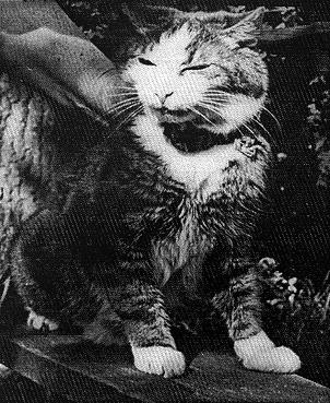 Кот Макс 1937-1957 гг. Пережил блокаду с семье  Веры Николаевны вместе с попугаем Жаконей.