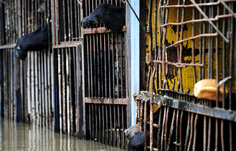 Flood-stricken zoo in the Far East city of Ussuriysk