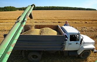 Загрузка зерна из комбайна в машины во время уборки урожая