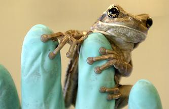 В Эквадоре насчитывается около 169 видов лягушек
