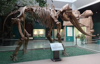 Скелет стегодона
